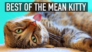 Cats Are Funny! - Best of The Mean Kitty Compilation | GET READY to LAUGH BIG!