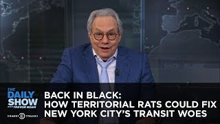 Back in Black: How Territorial Rats Could Fix New York City's Transit Woes - The Daily Show