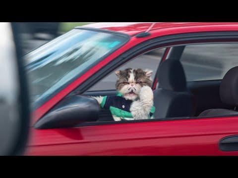 Pet Peeves - Driving