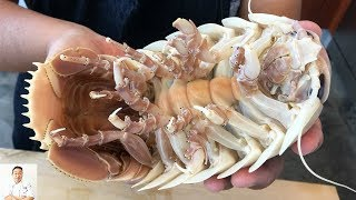GRAPHIC: Real Live Isopod Hour | Cut, Clean, Cook