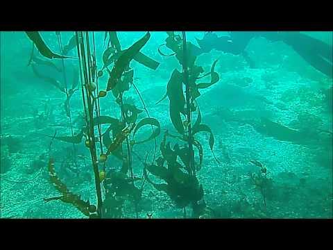 Malibu Divers Goes to Santa Barbara Island May 2013
