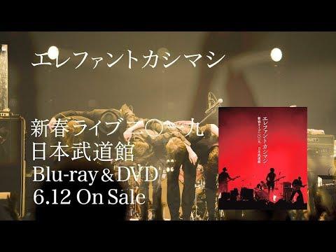 LIVE Blu-ray/DVD「新春ライブ2019 日本武道館」ダイジェスト