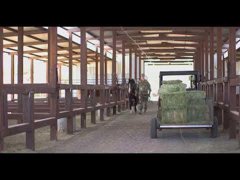 Operation Guardian Support,Horse Patrol Unit assist at the Nogales Border Patrol Station, U.S.!
