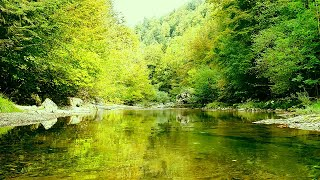 Water sounds for Sleeping (8D Audio) 💙 ASMR Forest Ambience 🍁 soothing river sounds for Meditation