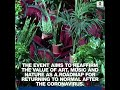 Barcelona opera house hosts concert for audience of potted plants | ABC News  - 00:54 min - News - Video