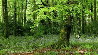A short 20min.Meditation in Nature-Soothing Sounds of Birdsong-Birds Singing-Relaxation