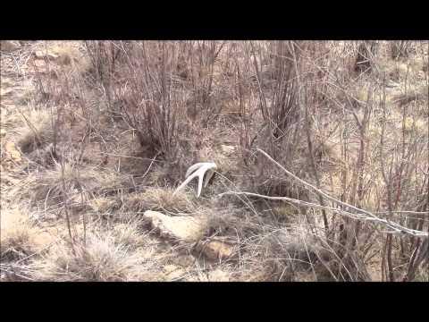 Hunting 2014 big buck found dead musica movil musicamoviles com