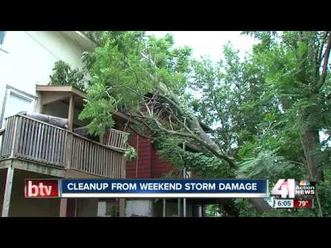 How to Prevent Your Trees Falling Victim to a Storm