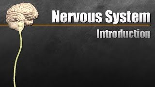 The Nervous System In 9 Minutes