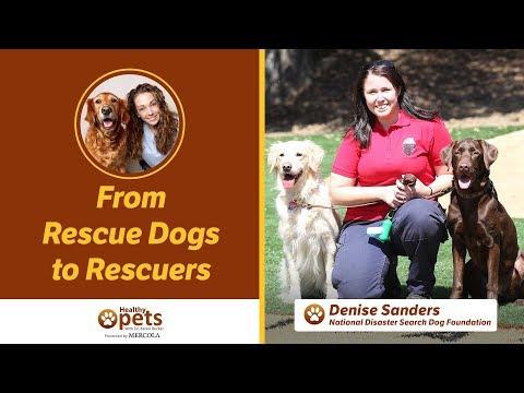 Dr. Becker Interviews Denise Sanders