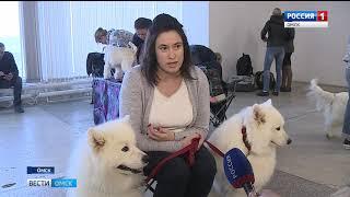 В Омске прошла выставка собак, кошек и не только