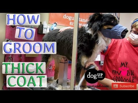 How to groom a dog with thick coat NO LINES