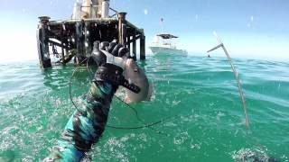 2/22/2014 Spearfishing the D-Tower