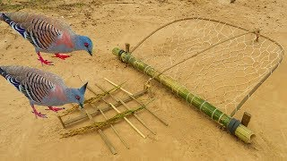 Easy Bird Trap - Simple DIY Creative Bird Trap make from Net That Work 100% By Men