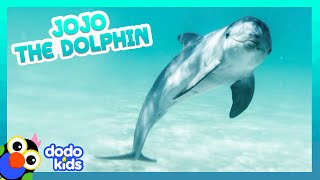 Dolphin Can't Stop Swimming With People And Chasing Their Boats | It's Me! | Dodo Kids