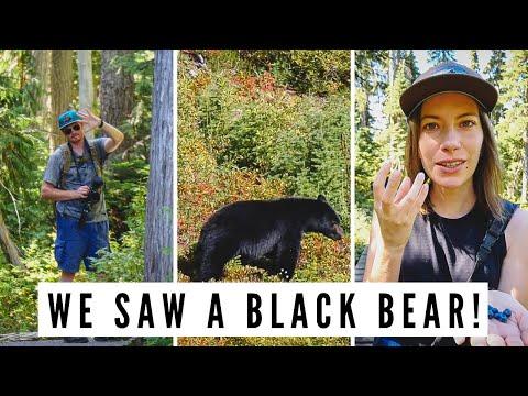 We Saw a BLACK BEAR on Mount Washington + Visiting STRATHCONA Park | Vancouver Island Road Trip