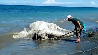 More na plažu izbacilo ogromno dlakavo čudovište (VIDEO)