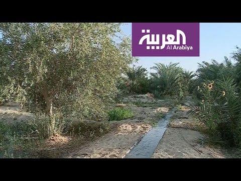 العربية معرفة: هكذا استوطن البشر منذ القدم