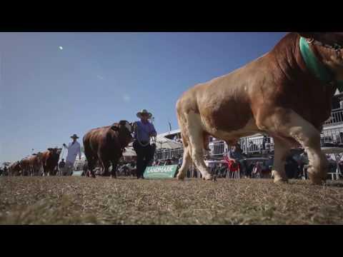 Beef Australia 2015 Highlights