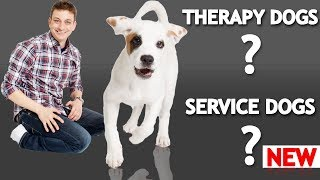 What's The Difference Between a Service Dog, Therapy Dog, and an Emotional Support Dog?