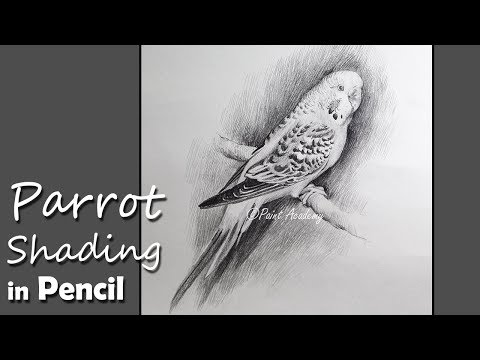 How to Shade Parrot in Pencil step by step drawing