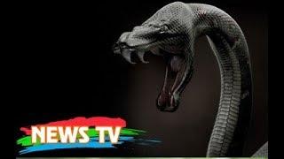 Top 10 loài rắn độc nhất thế giới từng biết đến