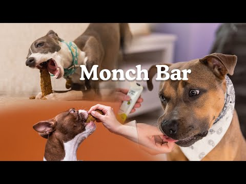 Kabo Announces Launch of Monch Bars: A Protein Bar for Dogs