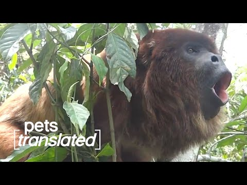 The Great Outdoors  | Pets Translated