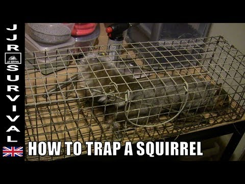 How To Trap A Squirrel