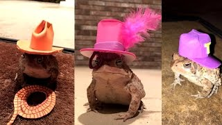 Man Creates Adorable Tiny Top Hats For Wild Toad