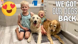 WE GOT OUR DOGS BACK!! *emotional*