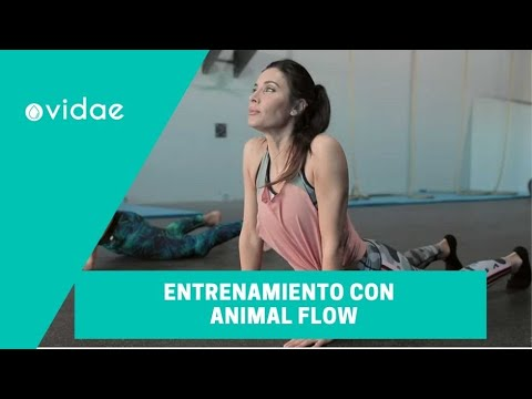 MÉTODO KOA: Entrenamiento Animal Flow