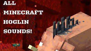 Minecraft 1.16! All Hoglin Sounds!