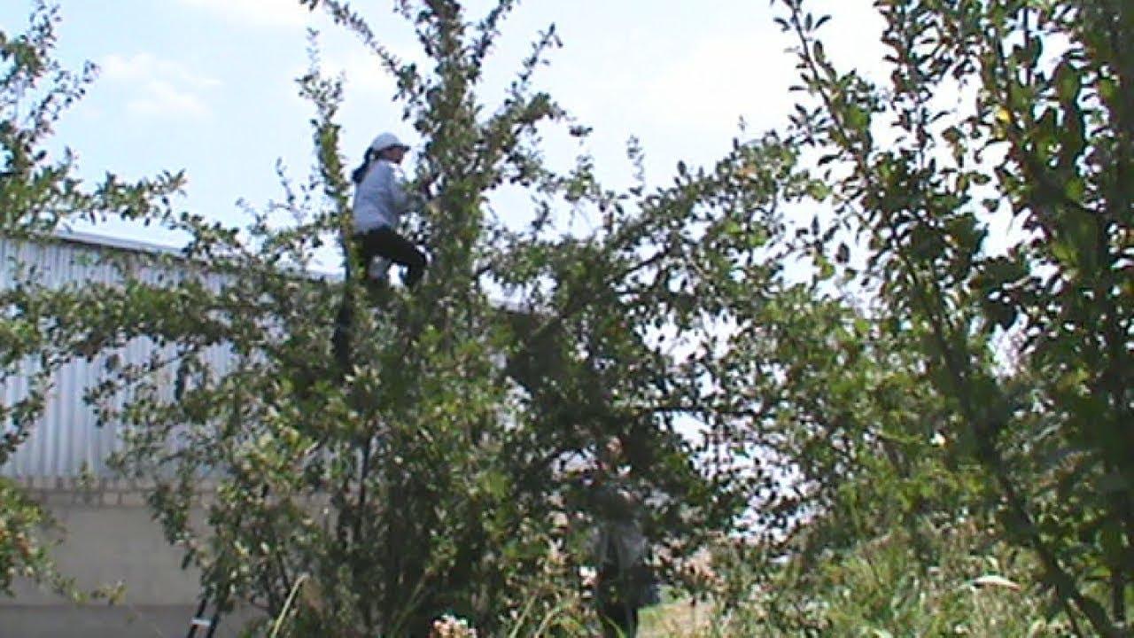 Акционеры народного предприятия заявляют о рейдерском захвате сада (КБР)