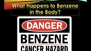 What Happens to Benzene in the Body?