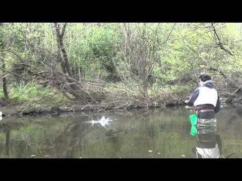 Pesca in Passata
