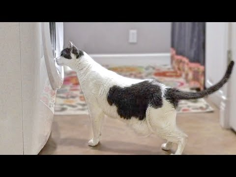Cat Scared By Washing Machine