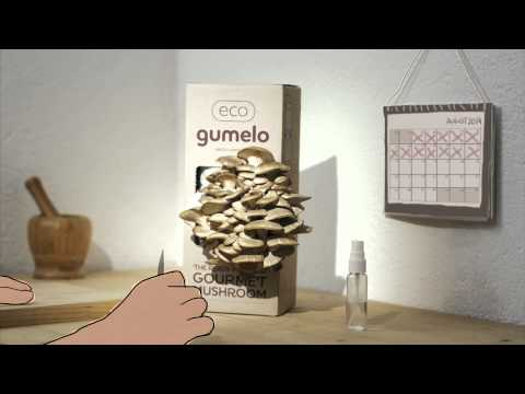 Eco Gumelo