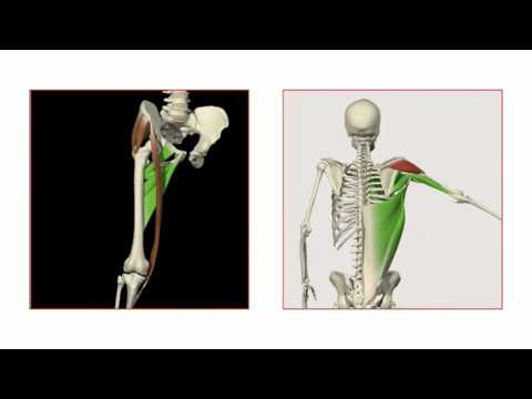 Primal Pictures 3D Functional Anatomy