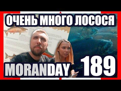 🇨🇦 Moran Day 189 — Очень Много Лосося