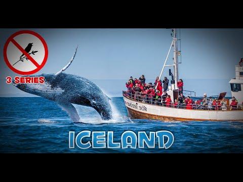 3 сер. самостоятельное путешествие по Исландии: китовая охота в Хусавик