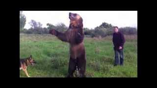 Как медведь Тима живёт в Испании