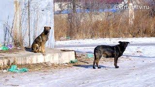 Быть ли в Артёме приюту для бездомных животных?