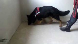 Schimmelpilzsanierung - http://hund-sucht-schimmel.de/schimmelspuerhund-FAQ.html