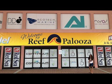 Live From Reefapalooza - Sunday