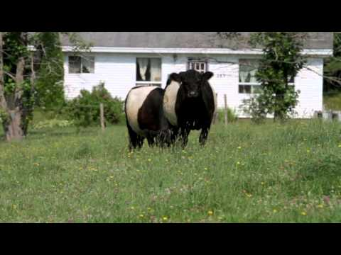 Kevin Veinot - Kevin's Family Farm - WhyHere.ca