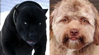 Beautiful and Unique Dogs