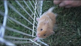 a tribute to our hamster