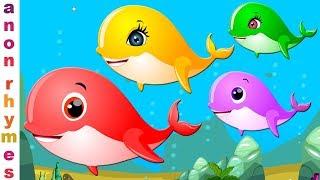 Educational Video For Babies   Shark Finger Family And More Finger Family For Kids   Kindergarten