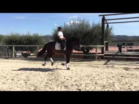 Urgente JV Stallion Appaloosa Yeguada Juan Vazquez